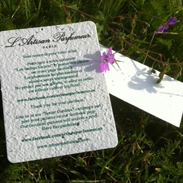 Papier-ensemence-germination