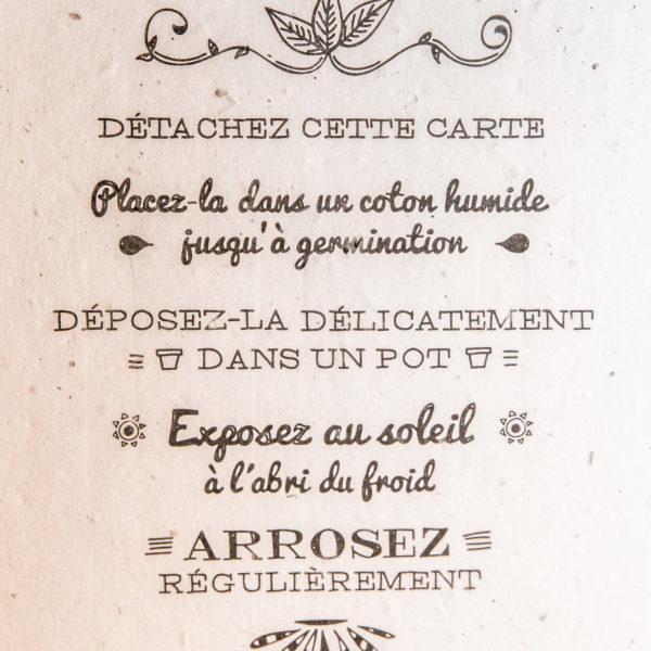 papier-ensemence-concept-principe